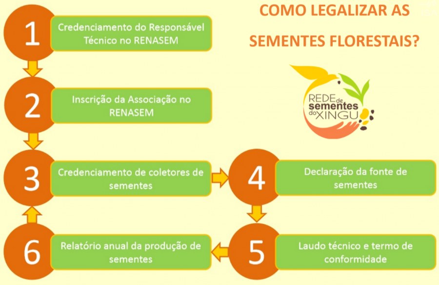 Como legalizar as sementes florestais?